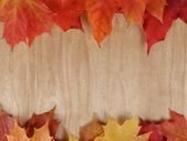木材表面における秋のカエデを葉します。 — ストック写真