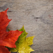 Autumn maple leaves on wood surface — Foto de Stock