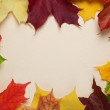 Autumn maple leaves on paper surface — Foto de Stock