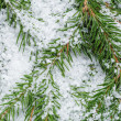 Composition from fir twigs with snowflakes — Stock Photo