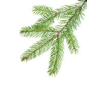 Green fir branch for decoration — Stock Photo