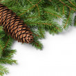 Border from fir twigs with shadow and cone — Stock Photo