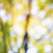 Autumn out of focus background — Stock Photo