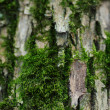Closeup photo of tree trunk with moss — Stock Photo
