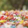 Autumn leaves on the ground — Stock Photo