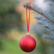 Christmas ball hanging on blue spruce — Stock Photo