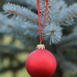 Christmas ball hanging on blue spruce — Stock Photo #33530333