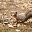 Small squirell in the park — Stock Photo