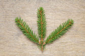 Fir twig on wooden table — Stock Photo