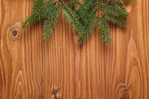 Green spruce twig on wooden plank — Photo