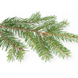Gree spruce twig — Stock Photo