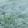 Close up photo of frosty morning grass — Stock Photo