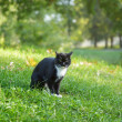 Black and white cat sitting on grass — Stock Photo
