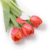 Three tulips with paper hearts — Stock Photo