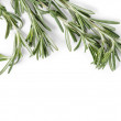 Stock Photo: Fresh rosemary branch