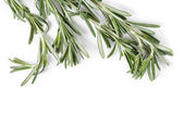 Fresh rosemary branch — ストック写真