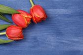 Tulip on wooden table — Stock Photo