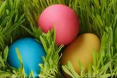 Easter eggs hiden in grass — Stock Photo