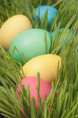 Easter eggs hiden in grass close up photo — Stock Photo