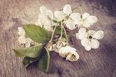 Körsbärsblommor blomma på gamla bord av trä — Stockfoto