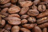 Big arabica coffee beans — Stock Photo