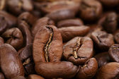 Big arabica coffee beans — Stock Photo