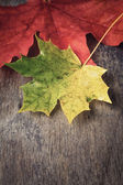 Autumn maple leaves on wood table — Stock Photo