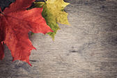 Autumn maple leaves on wood table — Stock Photo