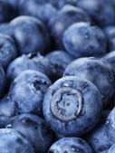 Freshly washed blueberries close up photo — Stock Photo