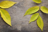 Ash leaves on old wood table — Stockfoto