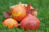 Funny halloween pumkins on grass — Stock Photo