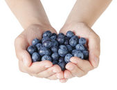 Female teen hands holding washed blueberries — Stock Photo