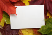 Autumn maple leaves with paper card — Stock Photo
