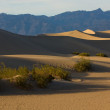 Mesquite dunes in Death Valley — Foto Stock