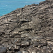 Pahoehoe lavlandscape — Stock Photo #26792345