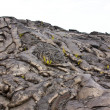 Basaltic lava — Stock Photo #26794121