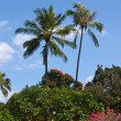 Oahu and palm trees — Stock Photo