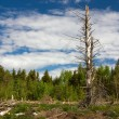 Forest clearing in Finland — Stock Photo