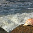 Stock Photo: Gastropod shell and seawaves