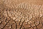 Mud cracks — Stock Photo