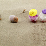 Coppia di pulcini sulla spiaggia — Stock Photo #18641611