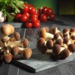 Oyster mushroom — Stock Photo #31840375