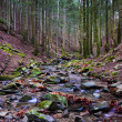 Stock Photo: Vallombrosforest, Torrent 1