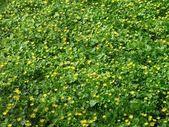 Yellow decorative flowers — Stock Photo