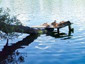 Wild ducks on the lake — Stock Photo