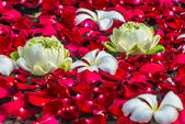 Rose petals, lotos and plumeria flowers in a water — Stock Photo