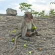 Monkeys in the mountains contemplate the nature — Stock fotografie