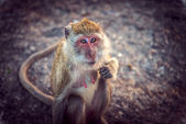 Monkey in the mountains looking at the camera — Стоковое фото