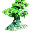 Bonsai trees,. — Stock Photo