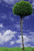 Green tree. — Stock Photo